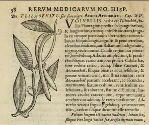 Vanilla (from Hernández Rerum Medicarum Novae Hispaniae Thesaurus, 1651)